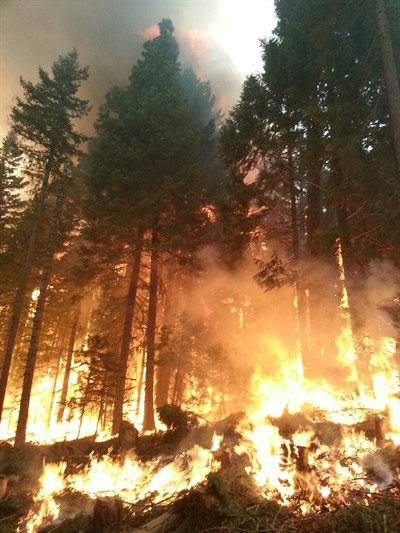 by: Photo by Gary Sampson Jr. - Fire officials burned out a timbered area on the Waterfalls 2 Fire, located about five miles northeast of Mount Jefferson over the weekend. The fire, which has burned over 12,000 acres, was about 50 percent contained on Tuesday.