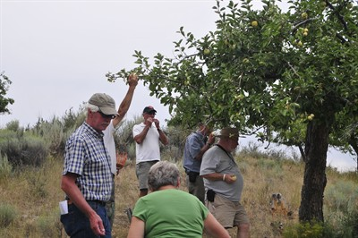 by: Photo by Bill Vollmer - Tour participants sample ripe yellow transparent apples from a tree at the Omar Cyrus orchard near Gray Butte.
