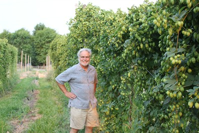 by: Photo By Susan Matheny - Jim Spencer of Madras has a hops yard of some 350 plants this year.