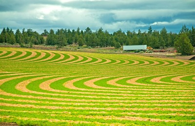 by: Photo by Ken L. Klock - Reader Ken Klock, of Madras, submitted this photo of an alfalfa field north of Madras, displaying a colorful striped pattern. Those interested in submitting their exceptional photos can send them to <span id=