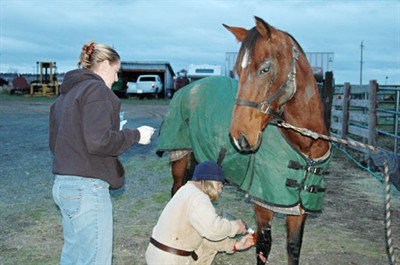 "by: Photo by Susan Matheny - Dr. Angie Kemper, left, watches as Karen McCarthy works on the injured leg of ""HoneyBadger,"" a thoroughbred mare found Nov. 8, along U.S. Highway 97, north of Madras. McCarthy bought the horse at auction so she could continue to care for her."