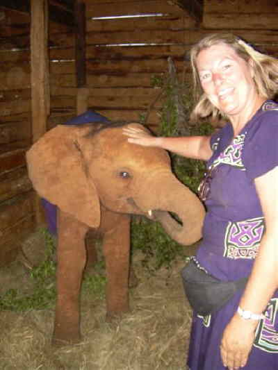 by: Submitted Photo - Teacher Judy Sweeney pets a baby elephant in Kenya.