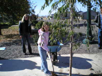 by: Submitted Photo - Crystal McNeilly plants a weeping cherry tree as Metolius Mayor Sandy Toms looks on.