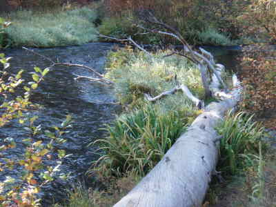by: Submitted photo - Logs have been anchored and placed in the Metolius River to provide fish habitat.