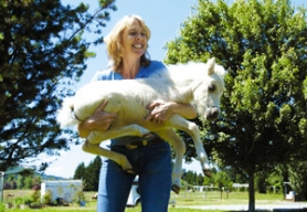 "by: Carole Archer, ""Hold your horses,"" says Sue Roake, as she picks up a 3-week-old mini horse, who has yet to be named."