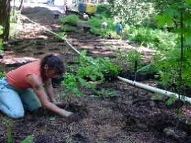 by: Tracy Stepp, Sandra Fernandez, with Earth Crusaders, helps replant more than 1,000 shade-tolerant plants in Wilderness Park last Saturday.