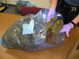 by: Special to, Oregon State Police confiscated 13.5 pounds of marijuana from a Ford Explorer that flipped on I-5 Saturday night. Three men from the Portland area were arrested on drug charges.