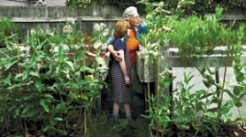 by: Jim Clark, Bonnie Kiser and niece Susanna Zimmerman examine the backyard milkweed plants Kiser and her husband have planted to try to make the area more hospitable to monarchs.