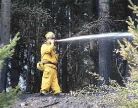 by: Courtesy Photo, A Forest Grove Fire & Rescue firefighter hoses down a brush fire during last weekend's heat wave.