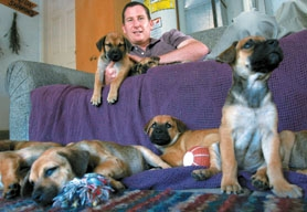 by: Jonathan House, TAKE A NUMBER – Houston Hickenbottom, pictured with some of the orphan puppies he and his wife Sharon are fostering, rounds up as many as he can for a photo.
