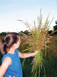 by: COURTESY OF OREGON WILD RICE, In their first experiment with wild rice, Barb and Fritz Foulke last month harvested 3,000 pounds from paddies that flood in the winter, a required growing condition for the crop.