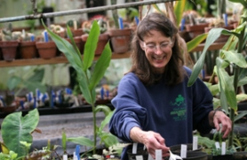 by: DENISE FARWELL, Gresham volunteer Janet Dorow surveys the starts Thursday in the greenhouse at Leach Botanical Garden, a 26-acre native-plant sanctuary that narrowly escaped becoming a site for condominiums in 1980.