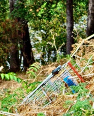 "by: Merry MacKinnon, ""Wheels Up"": This grocery shopping cart was recently shoved by a vandal off the bluff, lodging halfway down the hill by S.E.13th Avenue above Oaks Bottom. Such trashing of Portland results in a $500 fine, when the offender is caught."