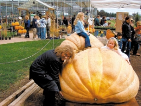 by: ©2005 FIR POINT FARMS, At last year's pumpkin weigh-off at Fir Point Farms in Aurora, festivalgoers get up close and personal with the contestants.