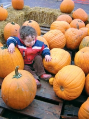 by: Brandy Slagle, Elliott Gibby discards his miniature orange pumpkin to try and lift a giant version. He traveled with his parents from Washougal, Wash., to tumble around in the already picked pumpkin pile at Sauvie Island on Sunday, Oct. 8.