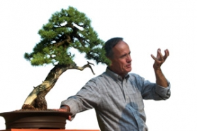 by: JIM CLARK, David DeGroot, curator of the Weyerhaeuser Pacific Rim Bonsai Collection, makes an example of a Sierra juniper. Other plants (right) in the exhibit include (from left) coast redwood, Chinese hackberry and Eastern white cedar.