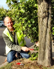 by: Merry MacKinnon, Urban Forestry Division education specialist Karl Dawson clips suckers off a street tree across from  Woodstock Library. Dawson inspected Woodstock Boulevard's street trees  recently, in preparation for teaching a class on pruning November  11 at Woodstock Community Center.