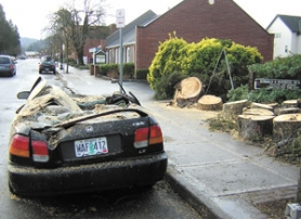 by: Tiffaney O'Dell, The soggy roots of a tree pulled out of the ground during the wind storm Thursday night, leaving this Honda squished on the side of Hood Avenue between Seventh and Eighth streets in downtown Gresham. City crews removed the tree from the road early Friday morning.