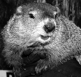 by: Submitted photo, Punxsutawney Phil is at the center of the media frenzy every year on Feb. 2 – Groundhog Day.