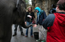 "by: DENISE FARWELL, For the ""Animal Encounter"" part of their date, Audrey Goldfarb (left) and Nate Hogen deliver some elephant snacks at the zoo, all recorded by a camera crew."