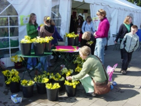 by: Submitted photo, Hundreds of fresh-cut daffodils made for a huge attraction for 