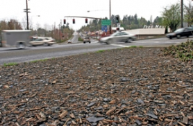 by: JIM CLARK, The state highway department has been using mulch that contains chunks of asphalt roofing shingles only to recently discover that it might be carcinogenic. This photo was taken at the corner of Southwest Bertha and Barbur boulevards.