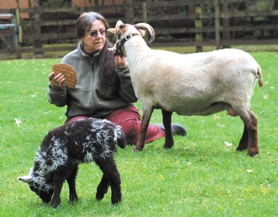 by: Barbara Adams, Lynne Deshler of Cedar Haven Farm, feeds new mom Tinkle,as six-day-old Theo grazes nearby.