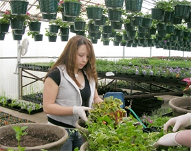 by: Nancy Townsley, Forest Grove High School junior Ashley Briggs fills large hanging baskets with greenery in anticipation of the annual plant sale.