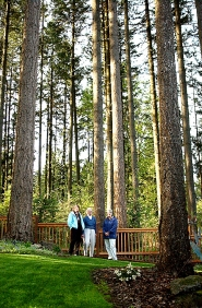 by: Christina Lent, Willow Heights neighbors Barbara Rose, Jeanette Howell and Valerie Vernon stand in a tree preserve they hope to protect. Trees in the grove tower 120 to 140 feet. The homeowners association maintains the preserve that could be threatened if property to the north is developed without a tree protection plan and buffer zone.