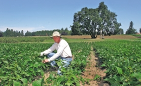 by:  JIM CLARK, Unlike farmer Don Kruger (pictured), one Oregon farmer says he's had no problem getting his produce into a local market.