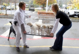 by: Jon House, Lake Oswego
