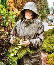 by: Merry MacKinnon, Woodstock homeowner Kathleen McCann holds a few of the many branches of lodgepole pine and salal that someone illegally cut from her yard and parking strip. The vigilante has struck four times in the last few months.