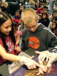by: Jennifer Clampet, HOW DO YOU FEEL? — Fifth-graders Corina Pigg and Jeff Watts poke at a sheep's brain during a presentation on the nervouse system at Tualatin Elemen-tary School on Friday.