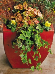 by: L.E. BASKOW, Not just for small spaces, containers can bring bursts of color to a large garden, too.