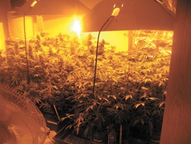 by: Courtesy Photo Police discovered a large indoor marijuana growing operation on Dec. 19.