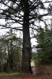 by: Jaime Valdez, 