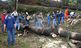 by: Deborah Shimkus, 