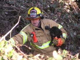 by: Submitted, Firefighter Dick Griffin climbs out of a 30-foot ravine in which CuJo, a 9-pound shih tzu puppy, was stuck for six days. CuJo had been lost and feared dead during last week's cold snap.