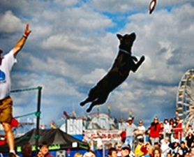 "by: , A snapshot of a bit of the action at a past ""X-Treme Air Dogs"" event, courtesy of Meadowview Productions."