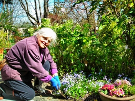 by: Elizabeth Ussher Groff, Woodstock's Sharon Streeter gives the neighborhood plant sale some gems from her garden, as a gift to all of those gardeners who are equally enamored of the therapy of dirt and digging.