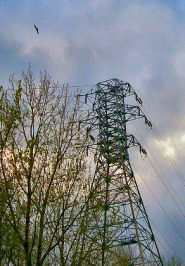 by: Rita A. Leonard, This electrical tower at The Oaks is home to a pair of osprey at the top, and to a pair of nesting Cooper's hawks lower down the tower.