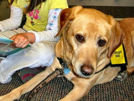 by: Ann Knutson, When young readers want to hone their skills, Therapy Dog Zara is all ears.