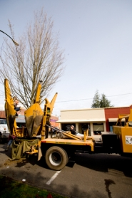 by: Chase Allgood, Dan Hickman operates the controls of a tree spade while Jose Campos climbs the massive tree-mover to protect the limbs of the maple being moved off 21st Avenue as part of Forest Grove's downtown sidewalk renovation project.