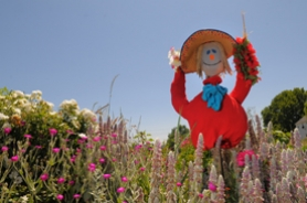 by: Vern Uyetake, Luscher Farm is blessed by a large population of scarecrows of an amazing variety — some large, some small and some even scary. Others, like the inset photo, are genuinely friendly.