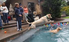 by: Vern Uyetake, Max runs and jumps into the pool on Saturday.
