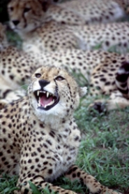 by: COURTESY OF THE OREGON ZOO, 