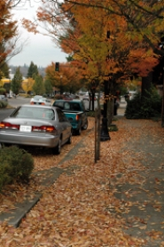 by: SUBMITTED PHOTO DOUG OLIPHANT, Lake Oswego resident Doug Oliphant is hoping that the many leaves that fall within the city will be raked up rather than washed into  our waterways.