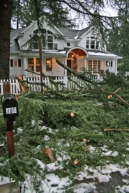 by: J. Brian Monihan, Trees and branches fell all over Lake Oswego during the recent snow and ice storm, such as this house buried in branches.