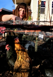 by: L.E. BASKOW, Naomi Montacre feeds worms to the chickens she keeps in a homemade coop in her North Portland front yard. An expert on lead poisoning warns people to be careful that their chickens aren't injesting lead from old house paint.