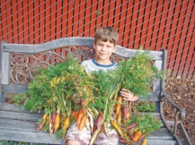 "by: Courtesy of Grant Vesely, Ian Vesely enjoys his bounty of ""Rainbow Blend"" carrots."